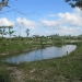 20-acre-farm-near-spanish-lookout-belize-7