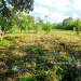 Residential Corner Lot for Sale in Cristo Rey Belize1