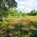 Residential Corner Lot for Sale in Cristo Rey Belize2