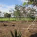 1.34 acres of sloping land in Belize for Sale1