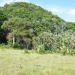 L271011BZ_Belize 72 Acres of Land for Sale5