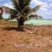 40 Acres with 685 Ft of Oceanfront in Northern Belize9