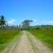Belize Farm for Sale 1600 Acres citrus and Teak 1