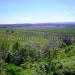 Belize Farm for Sale 1600 Acres citrus and Teak 2