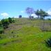 Belize Farm for Sale 1600 Acres citrus and Teak 3