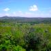 Belize Farm for Sale 1600 Acres citrus and Teak 4