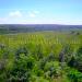 Belize Farm for Sale 1600 Acres citrus and Teak 5