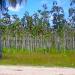 Belize Farm for Sale 1600 Acres citrus and Teak 7