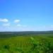 Belize Farm for Sale 1600 Acres citrus and Teak 9