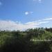 Belize Riverfront property for sale on 1.17 acres5