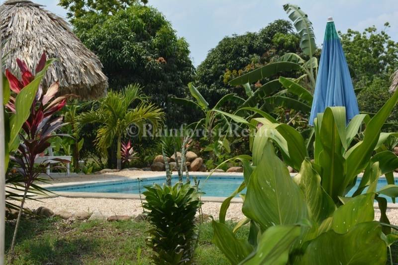 Belize rainforest retreat for sale for Plants for pool area