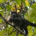 wildlife-monkey-2