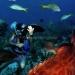Belize Resort for Sale San Pedro - Diving the Belize Barrier Reef