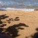 beach close up sand