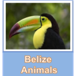 Belize Animals button