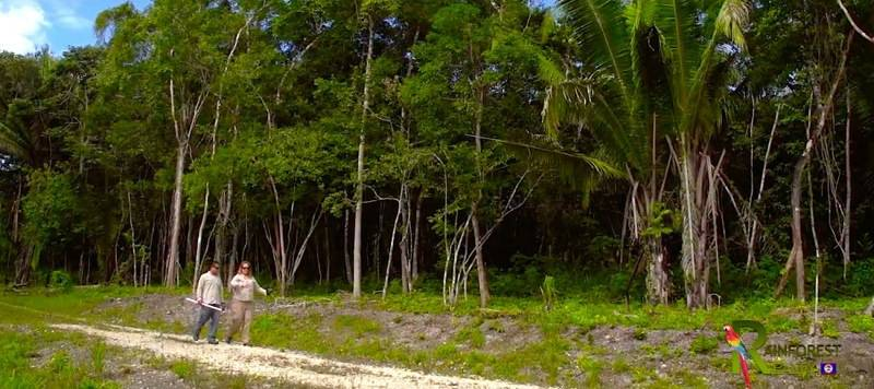 Belize Home Lots for Sale next to Maya Mountian Lodge