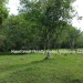 127 Acres with Riverfront17