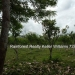 127 Acres with Riverfront34