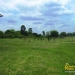 belize-for-sale-25-acres-on-the-river-4