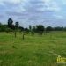 belize-for-sale-25-acres-on-the-river-5