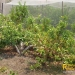 37-acre-farm-in-teakettle-3