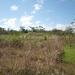 belize-50-acres-in-blackman-eddy-1