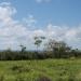 belize-50-acres-in-blackman-eddy-10