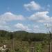belize-50-acres-in-blackman-eddy-13