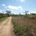 belize-50-acres-in-blackman-eddy-2
