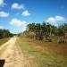 belize-50-acres-in-blackman-eddy-4