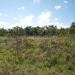 belize-50-acres-in-blackman-eddy-5