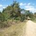 belize-50-acres-in-blackman-eddy-6