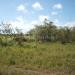 belize-50-acres-in-blackman-eddy-7