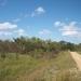 belize-50-acres-in-blackman-eddy-8