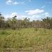 belize-50-acres-in-blackman-eddy-9