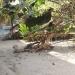 Harbor Place Duplex Placencia 1