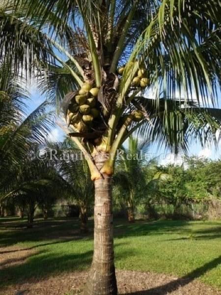 Belize Coconut Plantation Facilities