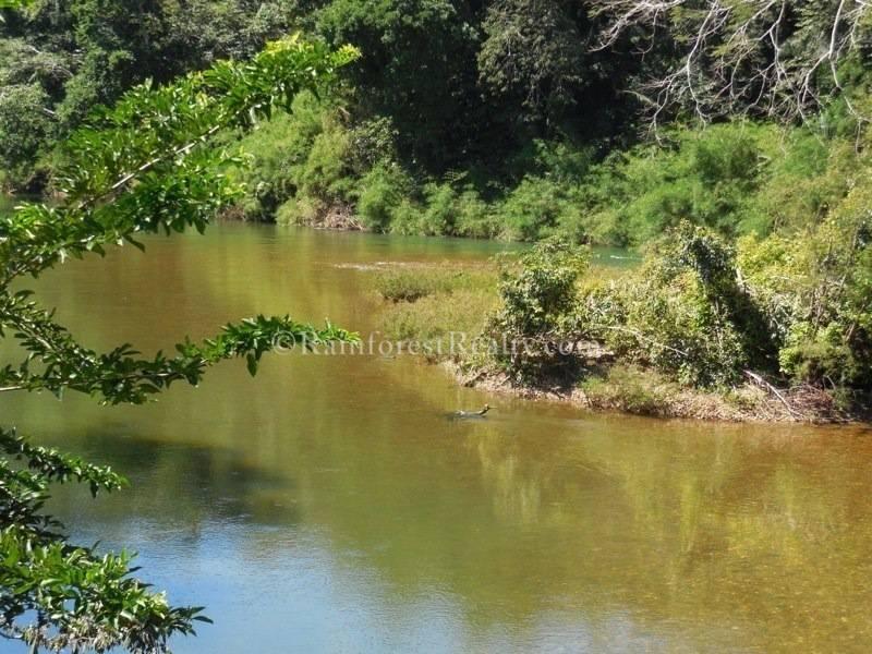 Mini Belize Coconut Plantation Riverfront