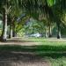 Coconut Trees Lane