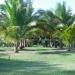 Miniture Coconut Trees