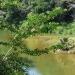 River vegitation