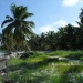 Mexico Rocks Ambergris Caye Lot of Beachfront Land 4