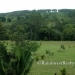 Gaia Way Estate Lots for Sale in Belize4