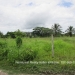 Belize Lot San Ignacio 1