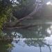 2.54 acres Riverfront for sale15