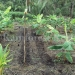 belize-25-acres-for-sale-farm20