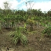 belize-25-acres-for-sale-farm24