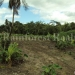 belize-25-acres-for-sale-farm25