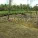 belize-25-acres-for-sale-farm27