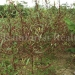 belize-25-acres-for-sale-farm31